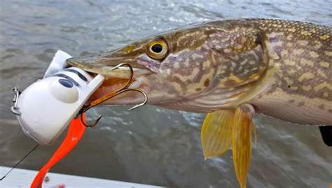 Pike Fishing Guide: How To Find, Catch and Land Pike