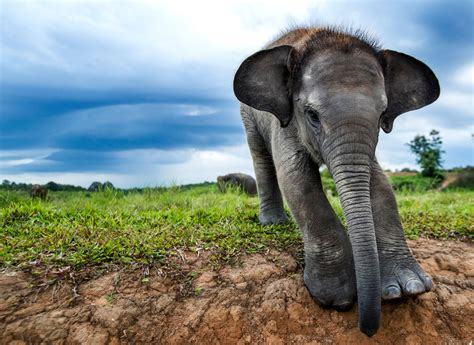Exclusive Look Into How Rare Elephants' Forests Are