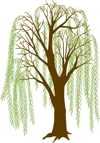 Weeping Willow Tree Silhouette - ClipArt Best