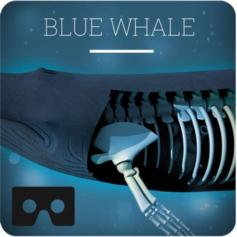Blue Whale VR Game App-Latest-Version-Free-Download-From