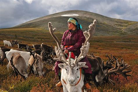 Photographer also a scholar captures the life of reindeer