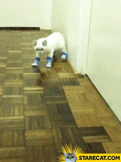 Cat wearing shoes fail GIF animation   StareCat