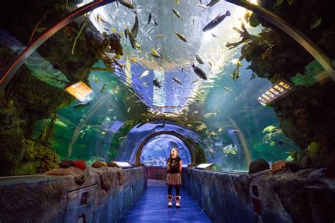 10 Things To Do In The Mall Of America With Kids